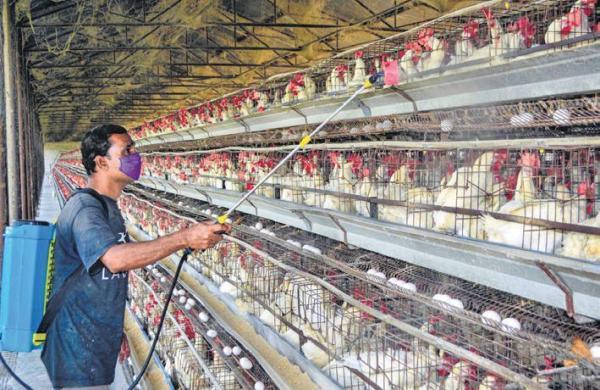 Bird flu: Jaipur Zoo shut down after rare stork dies