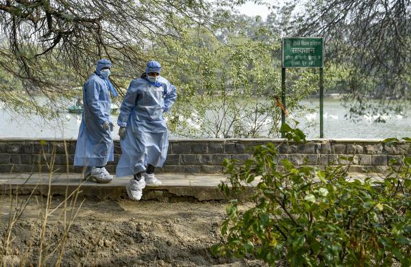 Bird flu: Over 3,400 birds culled in Maharashtra's Parbhani; samples taken from Delhi's Ghazipur market test negative