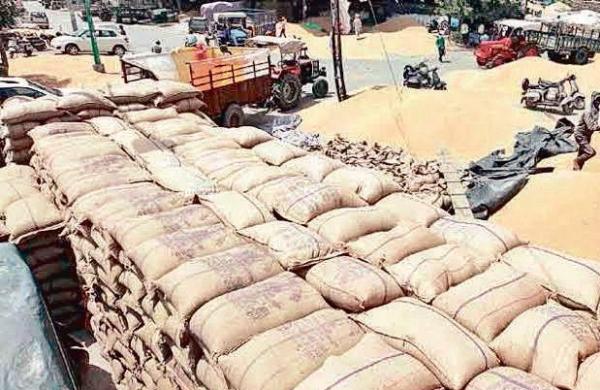 MP govt procures record 37.26 lakh MT paddyon support price