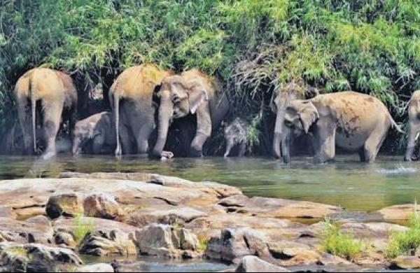 Uttarakhand HC stays government's decision to denotify Shivalik Elephant Reserve once again