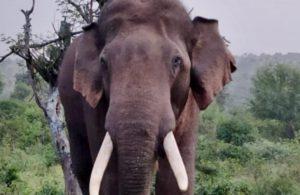 Elderly man killed in elephant attack in Chhattisgarh