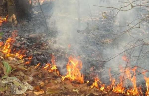 Wildfires gut 4000hectares forest area in Uttarakhand