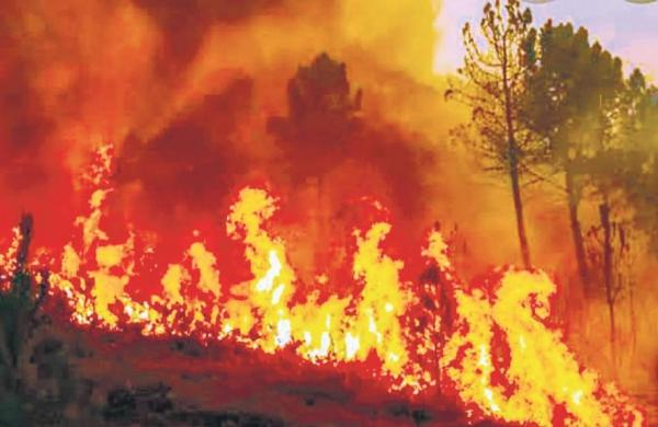 Wildfires: Uttarakhand to review economic loss methodology, activists raise questions