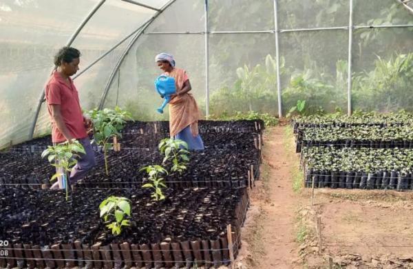 Didi Bagia Yojana: Creating 'Nursery Entrepreneurs' in rural Jharkhand