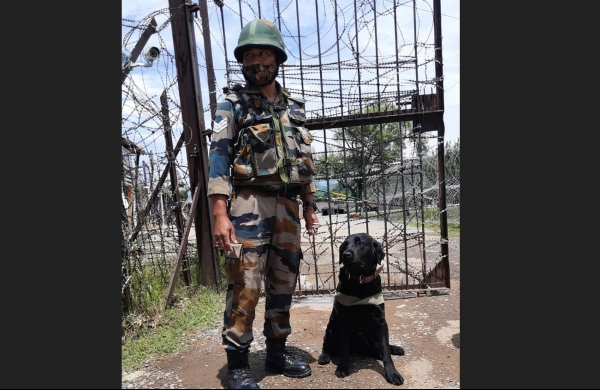Labrador 'Doti' stands guard against narcotics smugglingfrom Pakistan
