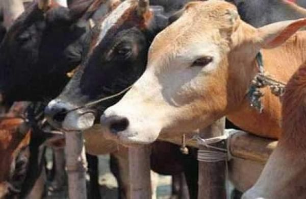 Cow slaughter case: Allahabad HC quashes detention of threepersons booked under NSA