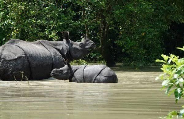 Nearly 5.74 lakh affected in Assam floods, Modi calls up CM Himanta