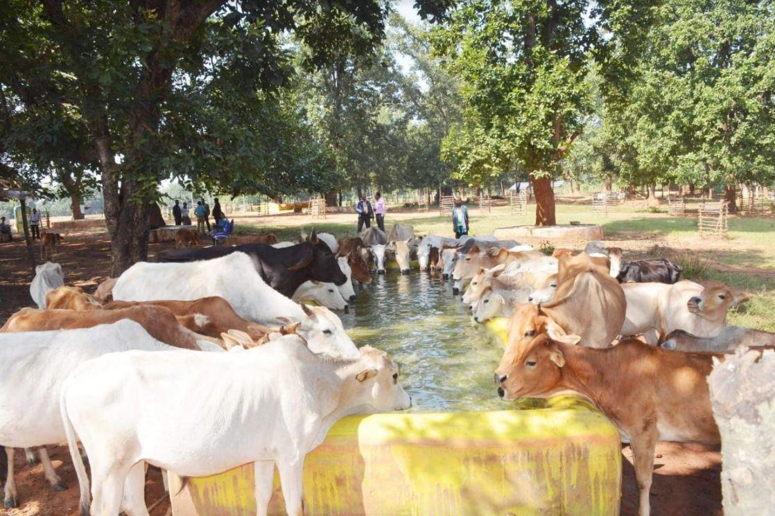 गोधन न्याय योजना से ग्रामीण अर्थव्यवस्था को मिलता संबल