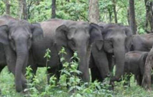 जंगली हाथी से एक ग्रामीण की मौत: वन विभाग के तीन अधिकारी-कर्मचारी हुए निलंबित