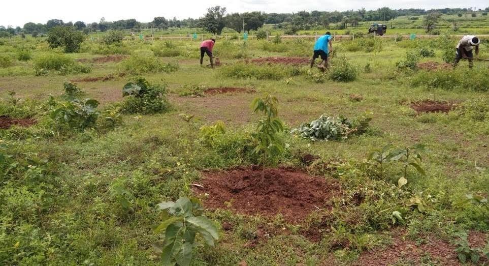 समाचार- मुख्यमंत्री वृक्षारोपण प्रोत्साहन योजना: राज्य में अब तक 3243 एकड़ रकबा में 1.21 लाख पौधों का रोपण