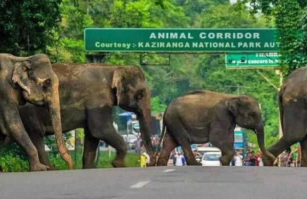 COVID: National parks in Assam to reopen for touristson October 1