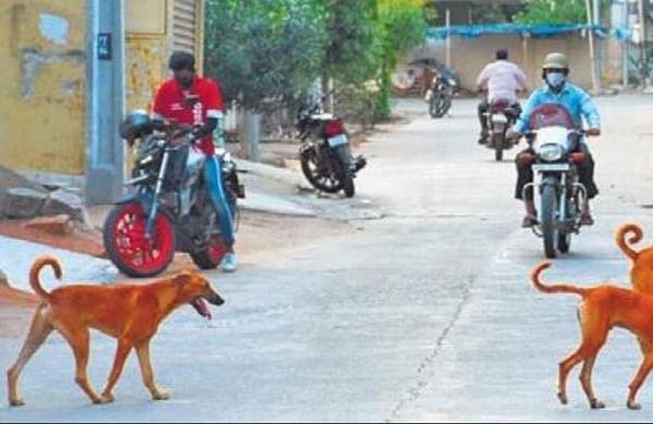 Five stray dogs killed in acid attack in Madhya Pradesh's Ujjain