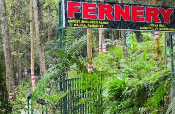 India's largest open air fernery developed in Uttarakhand's Ranikhet
