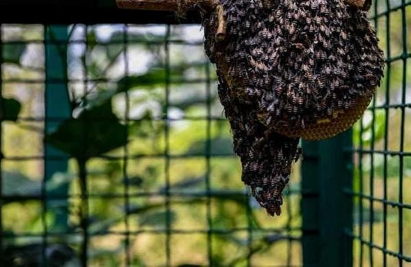 Noise control sheet absorber developed by mimicking bee hives