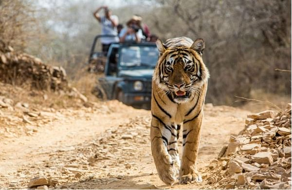 Submit 'factual report' over illegal construction in Corbett Tiger Reserve: NTCA to Uttarakhand forest dept