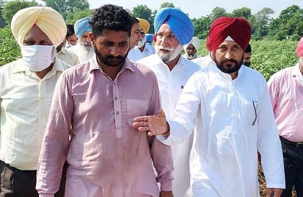 Cotton crop damage: Farmers 'gherao' residence of Punjab FM